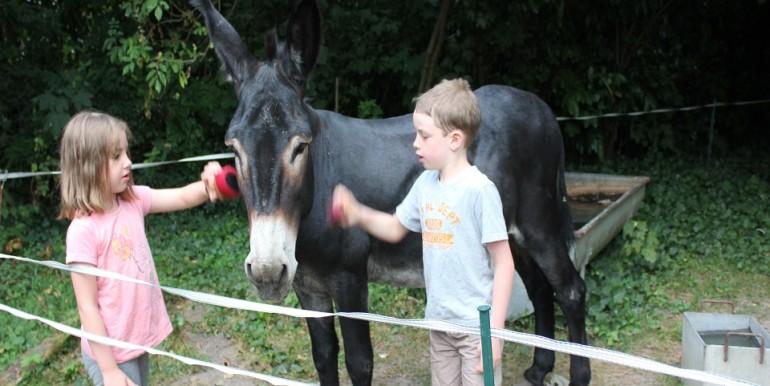 Maison du Jardinier soins à notre âne Baptiste