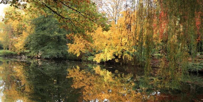 Metamorphoze-automne-sur-etang