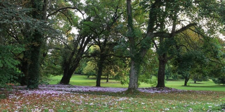 Grand Bouchet le parc