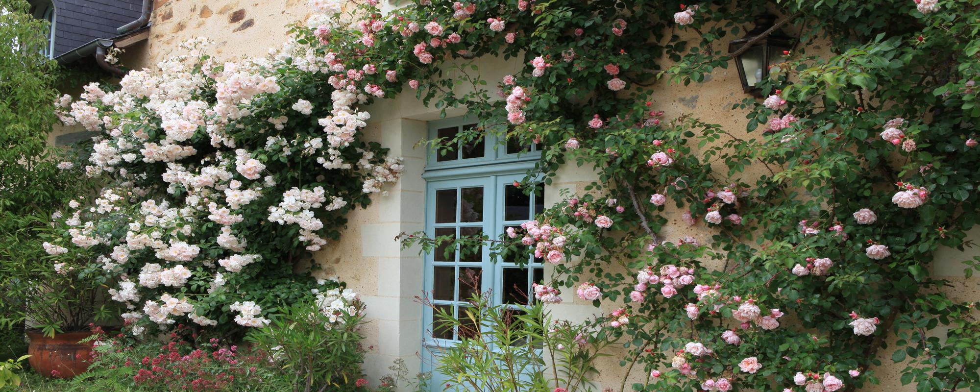 Passion de roses