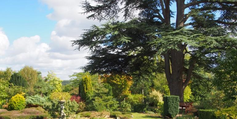 9.WebCedre-Arboretum